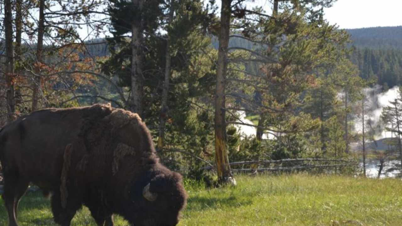 parco yellowstone (web source)