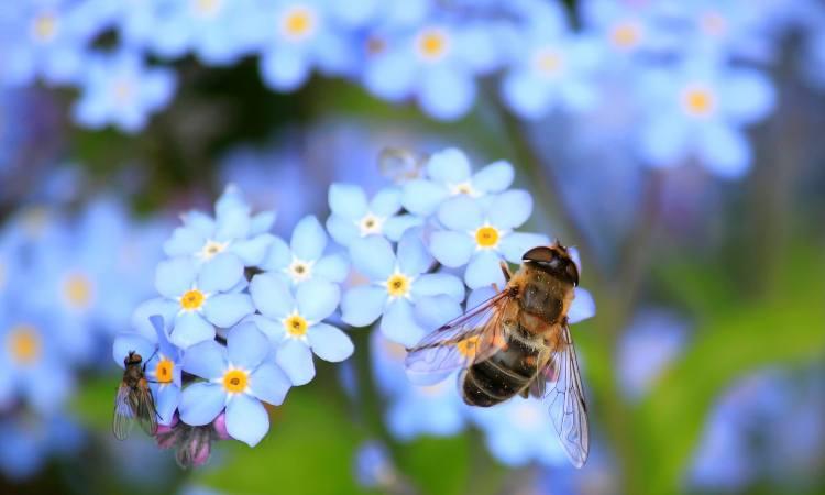 ape sui fiori