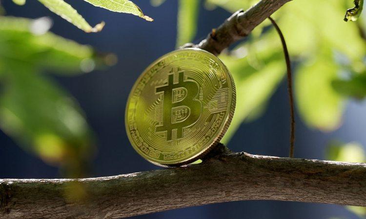 Una moneta dei BTC sopra a un albero